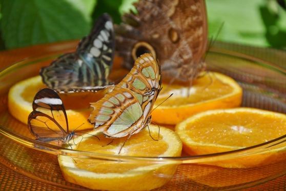 butterflies-1544008_960_720